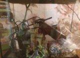 Аквариум. Фото 2.