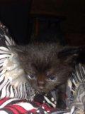 Котята в добрые руки. Фото 3.