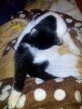 Кошечка. Фото 2.