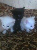 Породистые котята. Фото 1.