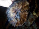 Шуба из сурка (степная норка). Фото 3.