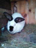 Крольчиха. Фото 1.