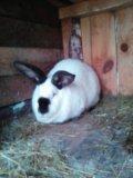 Крольчиха. Фото 2.