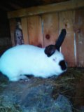 Крольчиха. Фото 3.