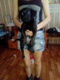 Собака маленькая девочка будет карманной. Фото 1.
