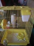 Клетка для крыс. Фото 1.