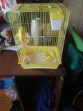 Клетка для крыс. Фото 2.