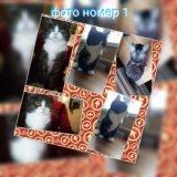 Внимание!!!!! продам котят!!!!. Фото 3.