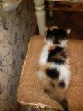 Кошечка , красивая. Фото 2.