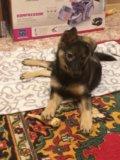 Отдам щенка в очень добрые и надежные ручки!!. Фото 2.