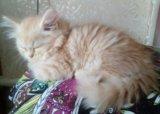 Кремовый котейка. Фото 4.