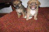 Милые щенятки. Фото 1.