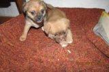 Милые щенятки. Фото 2.