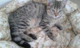 Котята домашние. Фото 2.
