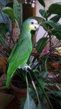 Амазон. Фото 1.