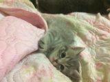 Котёнок 🐱. Фото 1.