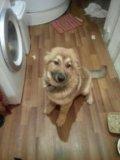 Собака. Фото 4.