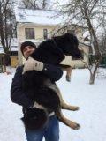 Собака даром, собака в добрые руки фред. Фото 4.