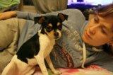 Чихуахуа девочка щенок. Фото 3.