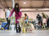 Сибирский хаски щенок. Фото 2.