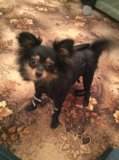 Комбинезон для собак. Фото 4.