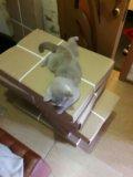 Котик на вязку. Фото 4.