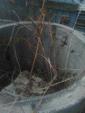 Кольцо бетонное канализационное. Фото 2.