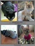 Стрижка кошек и собак. Фото 1.