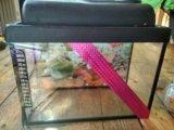 Продам аквариум. Фото 4.