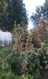 Участок, 700 сот., сельхоз (снт или днп). Фото 13.
