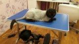 Груминг.стрижка собак и кошек. грумер. Фото 4.