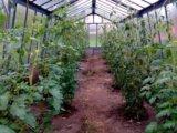 Участок, 700 сот., сельхоз (снт или днп). Фото 16.