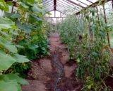 Участок, 700 сот., сельхоз (снт или днп). Фото 15.