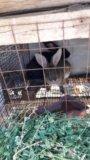 Кролики. Фото 1.