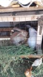 Кролики. Фото 2.
