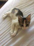 Котенок(девочка)в добрые руки. Фото 3.