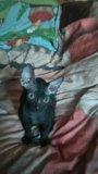 Котик 4 мес, кушает все. Фото 1.