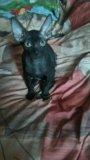 Котик 4 мес, кушает все. Фото 2.