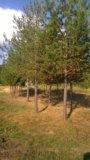 Участок, от 15 до 30 сот., сельхоз (снт или днп). Фото 5.
