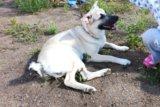 Собака. Фото 3.