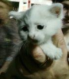 Котенок в добрые руки. Фото 2.