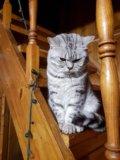 Котенок. Фото 3.