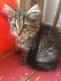 Котята. Фото 1.