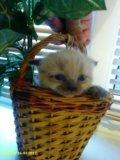 Котеня. Фото 1.