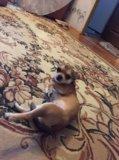 Продам собаку. Фото 1.