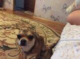 Продам собаку. Фото 3.