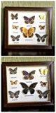 Бабочки. Фото 1.
