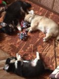 Животные. Фото 3.