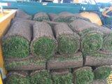 Рулонный газон. Фото 1.