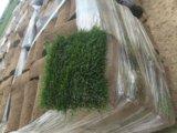Рулонный газон. Фото 2.